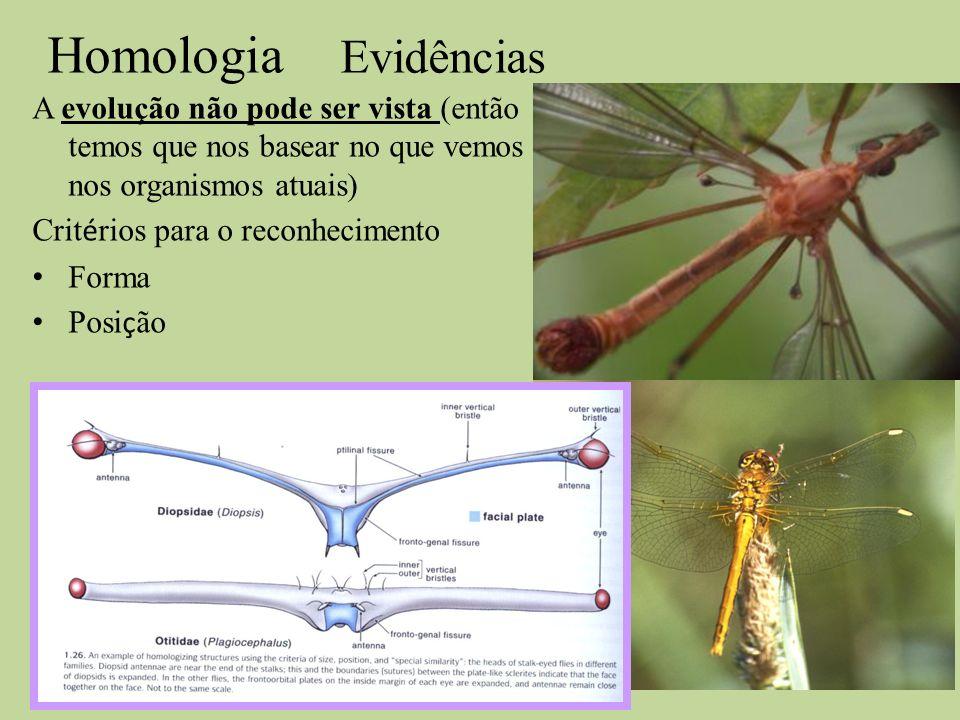Homologia Evidências A evolução não pode ser vista (então temos que nos basear no que vemos nos organismos atuais) Crit é rios para o reconhecimento F