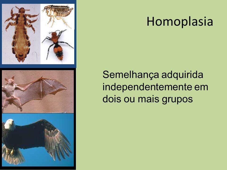 Homoplasia Semelhança adquirida independentemente em dois ou mais grupos