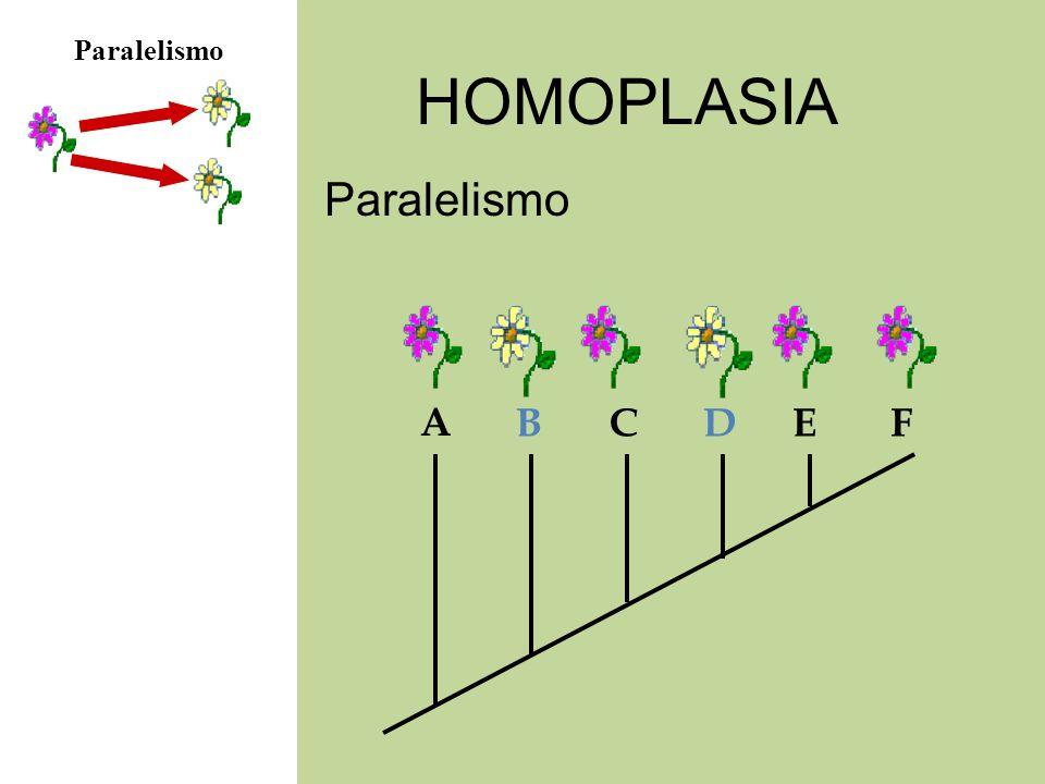 HOMOPLASIA Paralelismo A BCDEF
