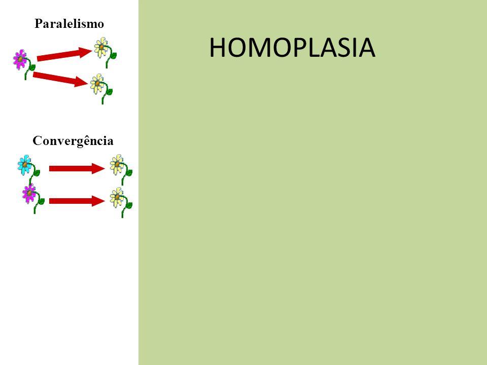 HOMOPLASIA Convergência Paralelismo