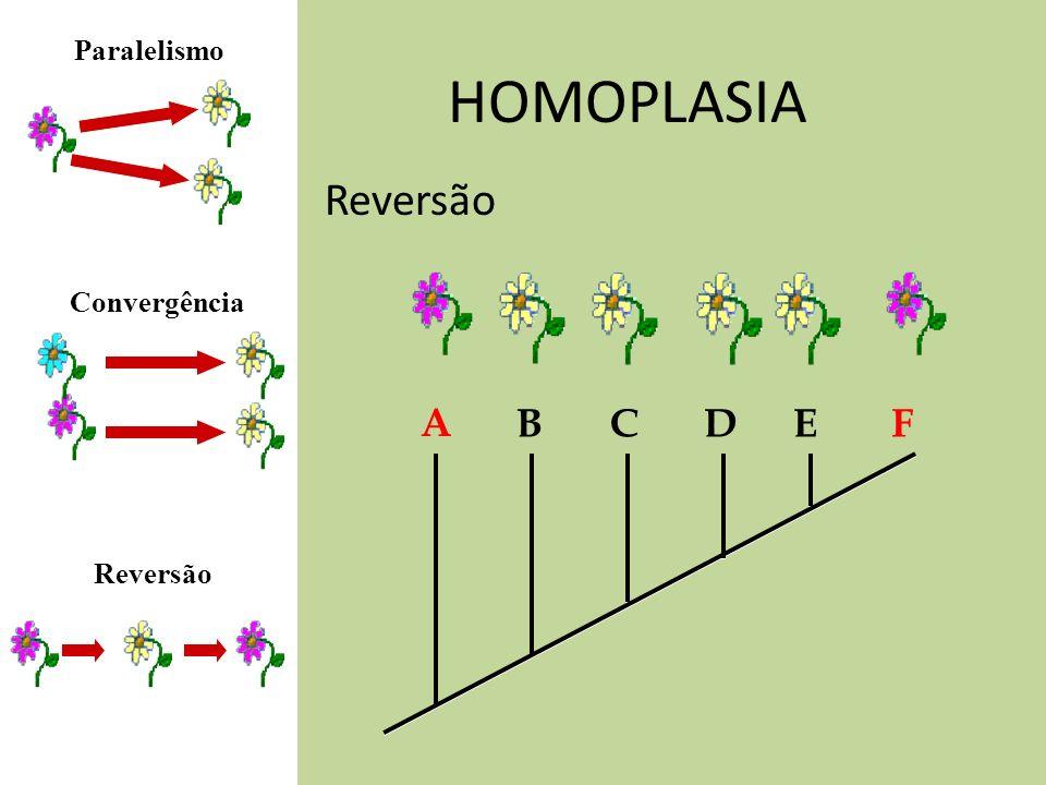 HOMOPLASIA Reversão A BCDEF Convergência Paralelismo Reversão