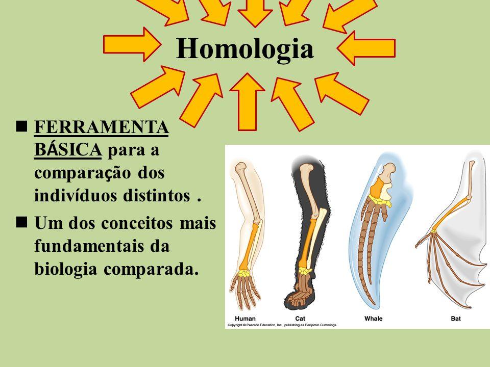 Homologia FERRAMENTA B Á SICA para a compara ç ão dos indiv í duos distintos. Um dos conceitos mais fundamentais da biologia comparada.