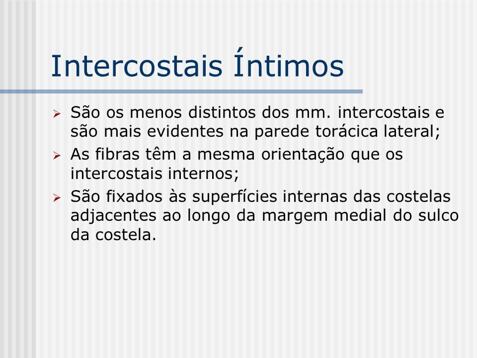 Intercostais Íntimos São os menos distintos dos mm. intercostais e são mais evidentes na parede torácica lateral; As fibras têm a mesma orientação que