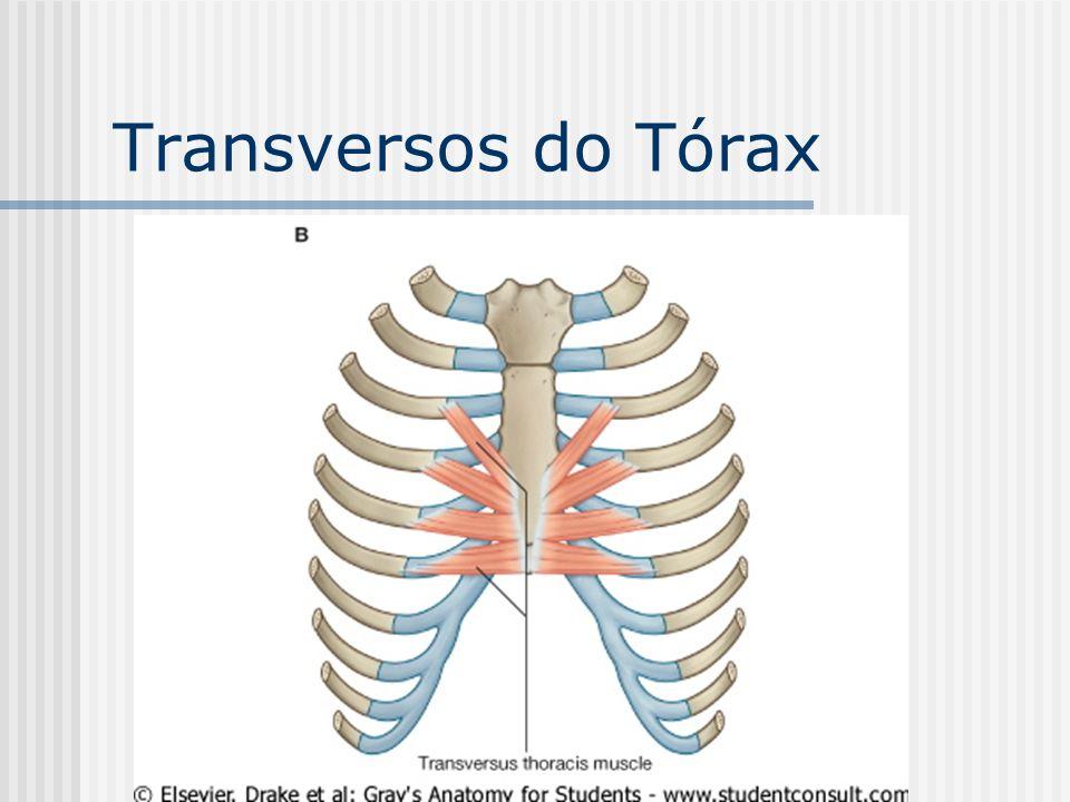 Transversos do Tórax