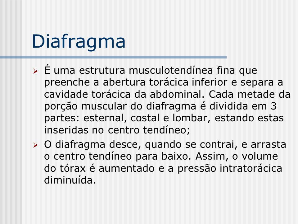 Diafragma É uma estrutura musculotendínea fina que preenche a abertura torácica inferior e separa a cavidade torácica da abdominal. Cada metade da por