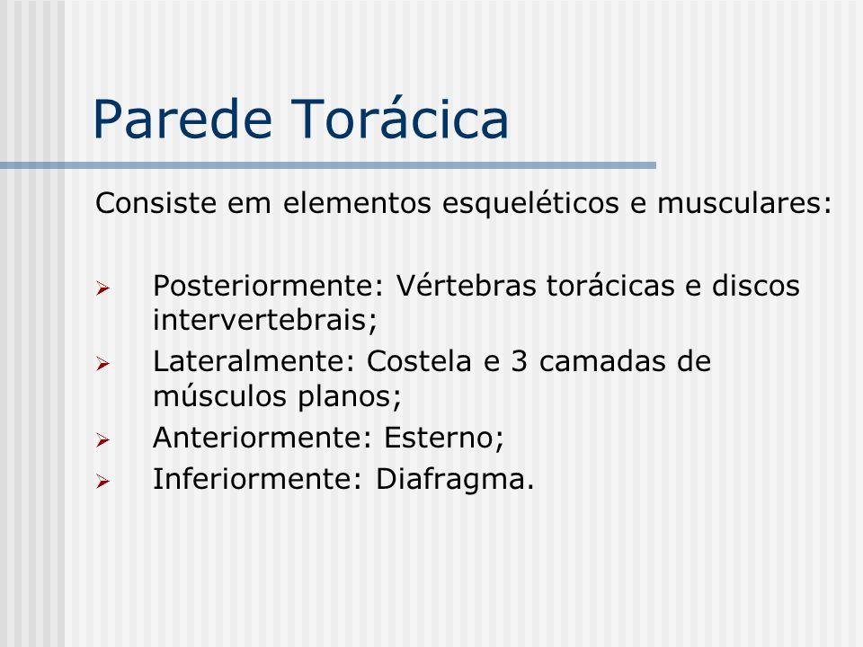 Parede Torácica Consiste em elementos esqueléticos e musculares: Posteriormente: Vértebras torácicas e discos intervertebrais; Lateralmente: Costela e