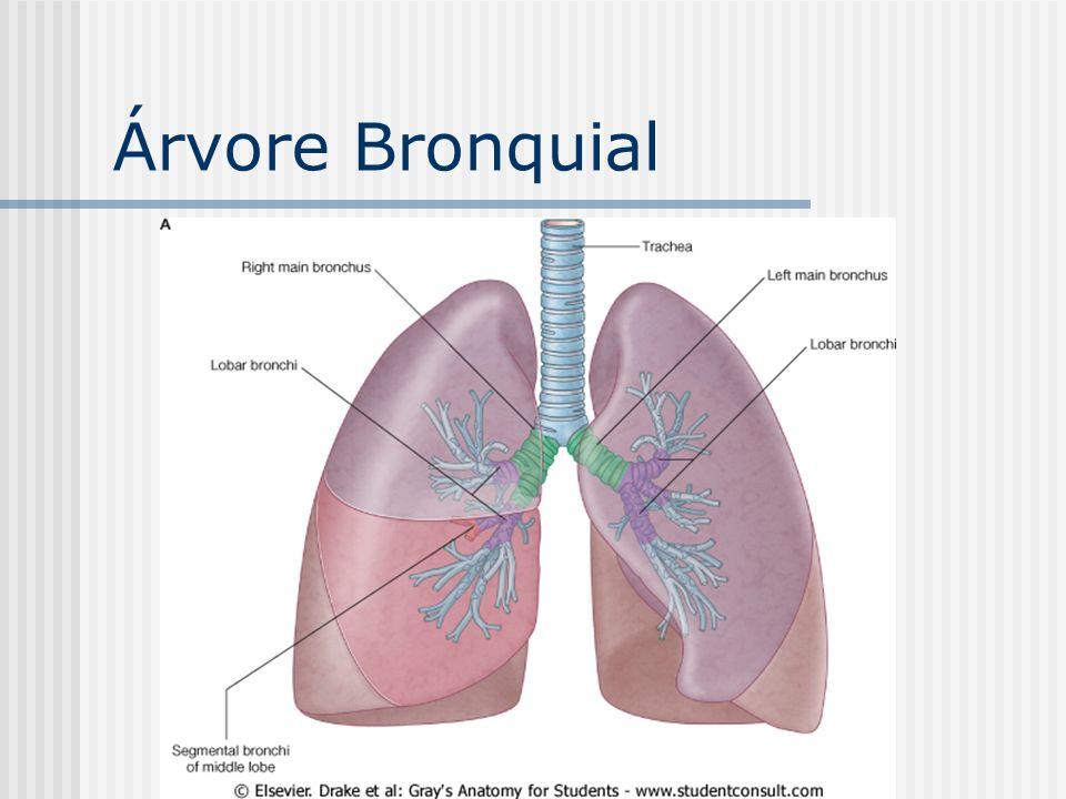 Árvore Bronquial