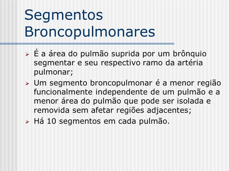 Segmentos Broncopulmonares É a área do pulmão suprida por um brônquio segmentar e seu respectivo ramo da artéria pulmonar; Um segmento broncopulmonar