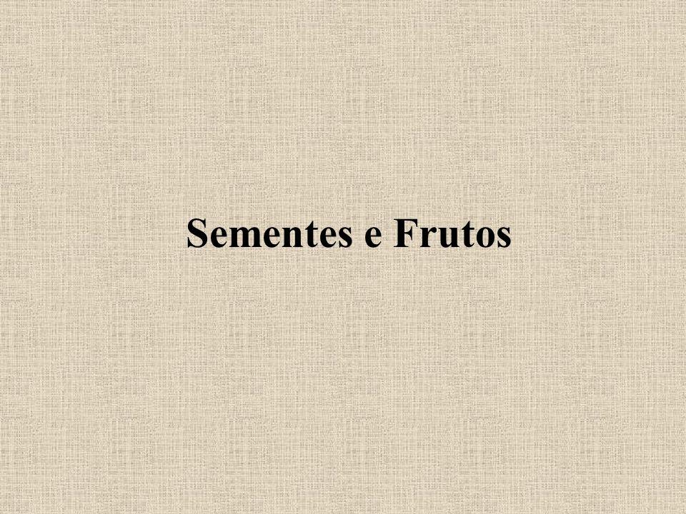 Angiosperma - Fruto /semente O fruto é orgão exclusivo das angiospermas.