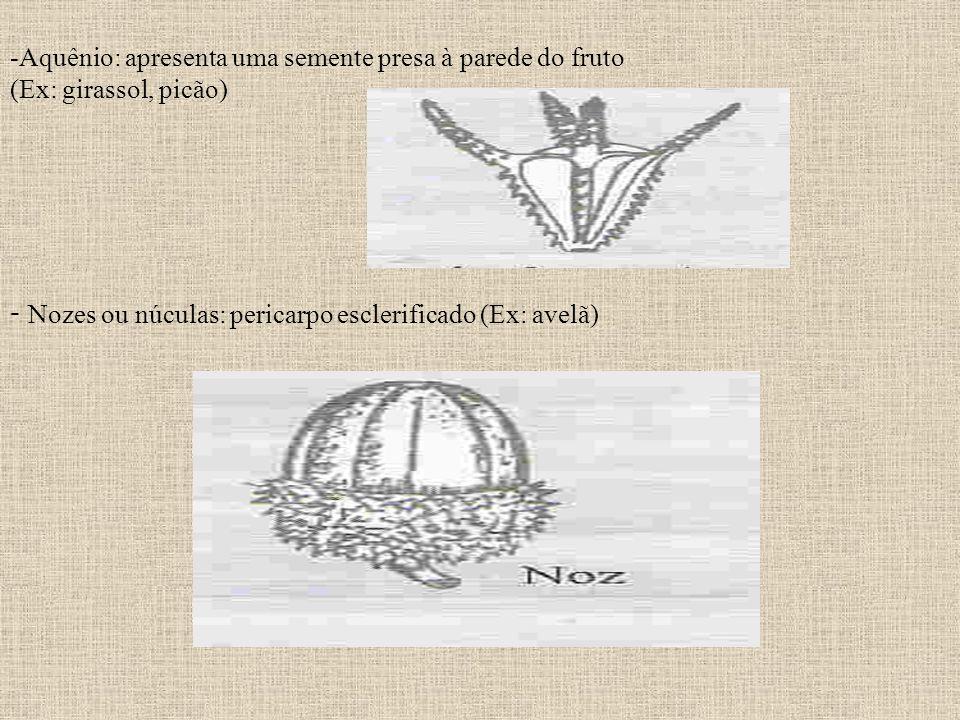 -Aquênio: apresenta uma semente presa à parede do fruto (Ex: girassol, picão) - Nozes ou núculas: pericarpo esclerificado (Ex: avelã)