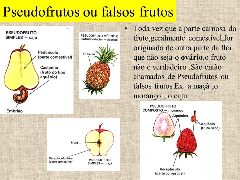 Pseudofrutos ou falsos frutos Toda vez que a parte carnosa do fruto,geralmente comestível,for originada de outra parte da flor que não seja o ovário,o