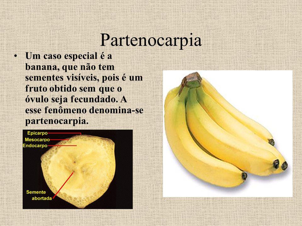 Partenocarpia Um caso especial é a banana, que não tem sementes visíveis, pois é um fruto obtido sem que o óvulo seja fecundado. A esse fenômeno denom