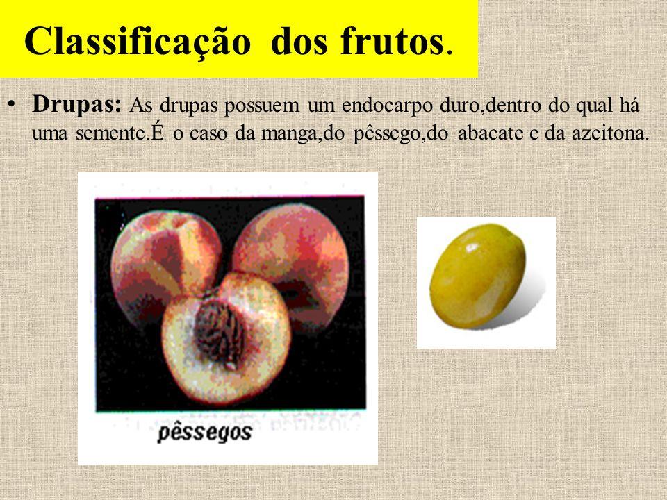Classificação dos frutos Frutos secos: Os frutos secos podem ser deiscentes ou indeiscentes Frutos secos deiscentes: São aqueles que,quando maduros,abrem -se liberando as sementes(flamboyant,feijão,soja, ervilha).