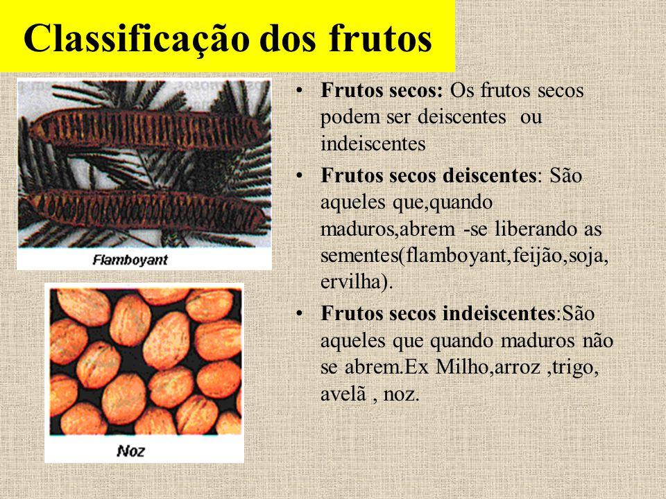 Classificação dos frutos Frutos secos: Os frutos secos podem ser deiscentes ou indeiscentes Frutos secos deiscentes: São aqueles que,quando maduros,ab