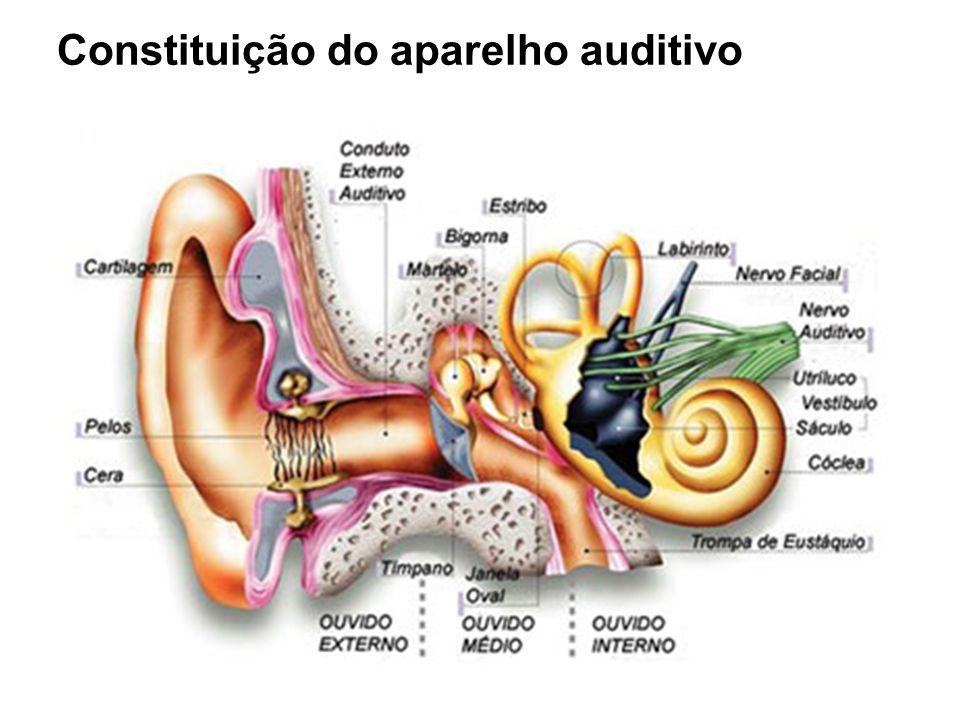 Constituição do aparelho auditivo