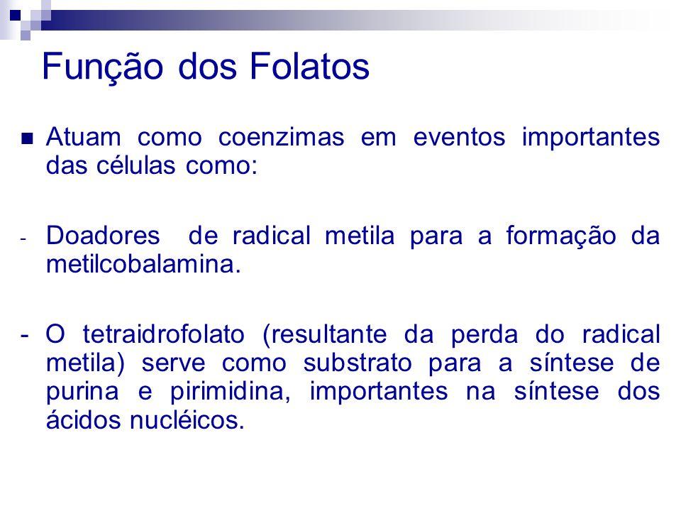 Função dos Folatos Atuam como coenzimas em eventos importantes das células como: - Doadores de radical metila para a formação da metilcobalamina. - O