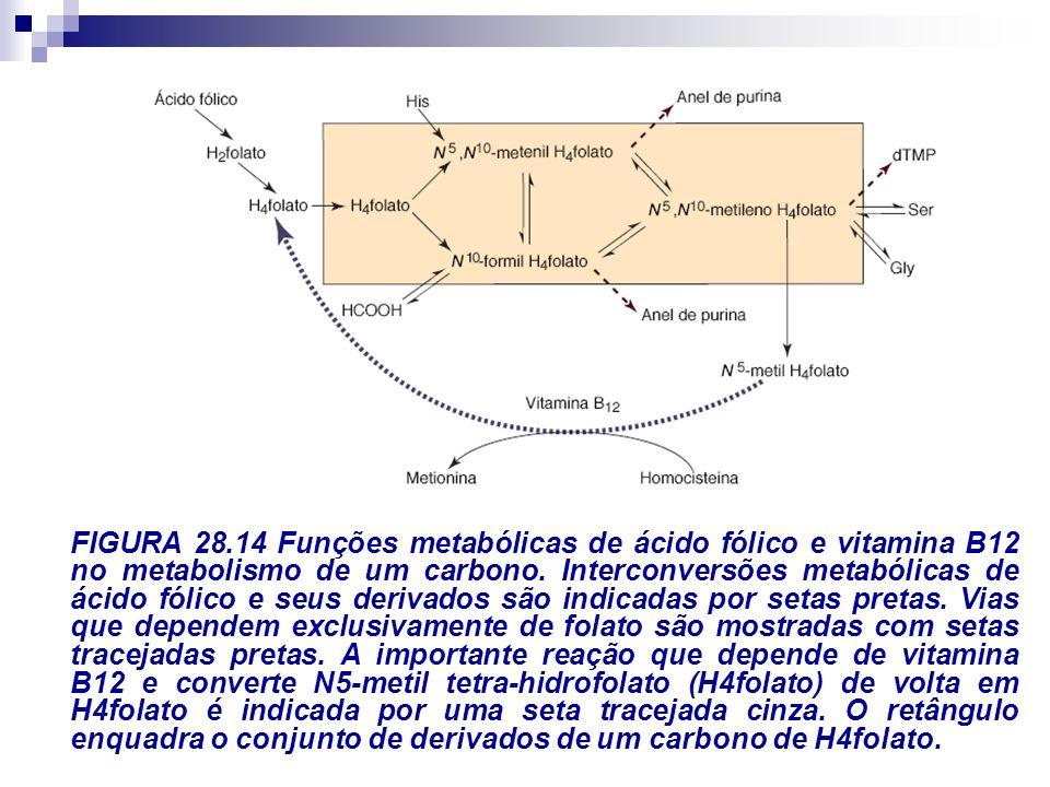 FIGURA 28.14 Funções metabólicas de ácido fólico e vitamina B12 no metabolismo de um carbono. Interconversões metabólicas de ácido fólico e seus deriv