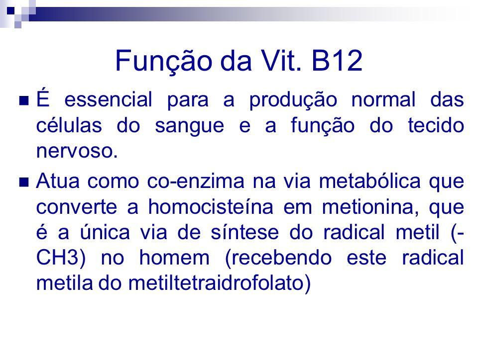 Função da Vit. B12 É essencial para a produção normal das células do sangue e a função do tecido nervoso. Atua como co-enzima na via metabólica que co