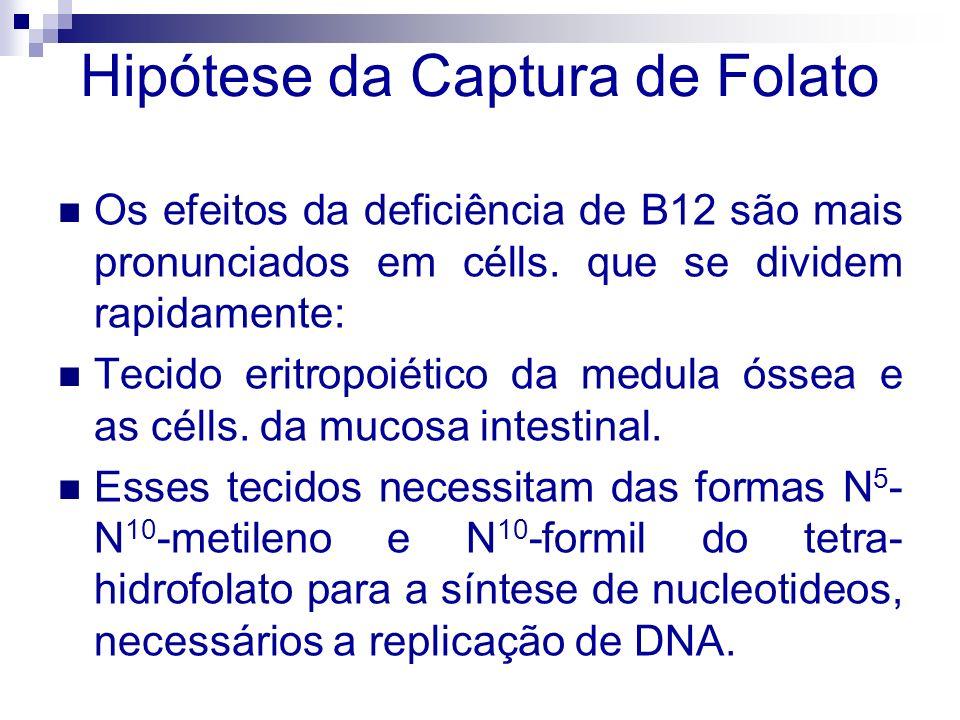 Na deficiência de B12, utilização da forma N 5 - metil-tetrahidrofolato na metilação dependente da B12 da homocisteína à metionina é prejudicada.