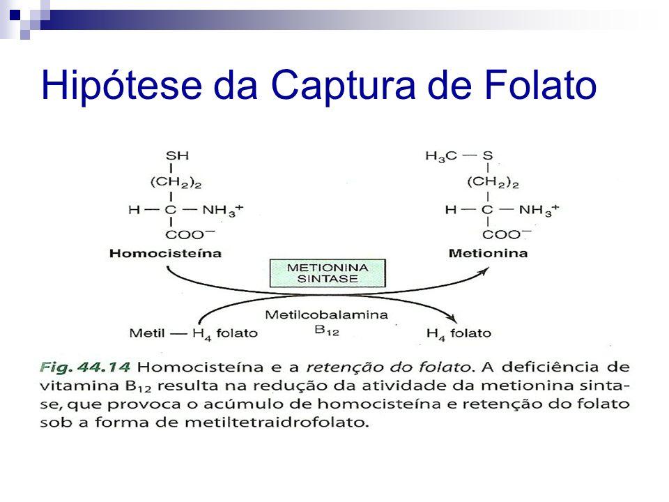 Absorção dos Folatos Geralmente as várias formas de folato são absorvidas na metade superior do intestino delgado
