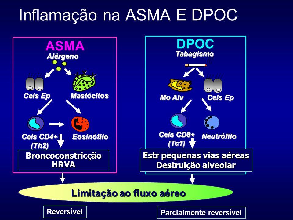 Y Y Y Mastócitos Cels CD4+ (Th2)Eosinófilo Alérgeno Cels Ep ASMA BroncoconstricçãoHRVA Mo Alv Cels Ep Cels CD8+ (Tc1) Neutrófilo Tabagismo Estr pequen