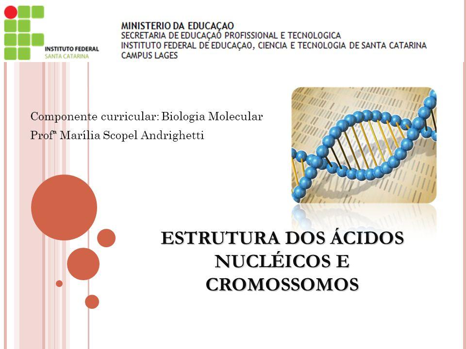 Componente curricular: Biologia Molecular Profª Marília Scopel Andrighetti ESTRUTURA DOS ÁCIDOS NUCLÉICOS E CROMOSSOMOS