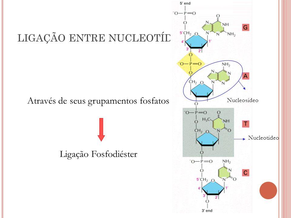 LIGAÇÃO ENTRE NUCLEOTÍDEOS Através de seus grupamentos fosfatos Ligação Fosfodiéster Nucleosídeo Nucleotídeo