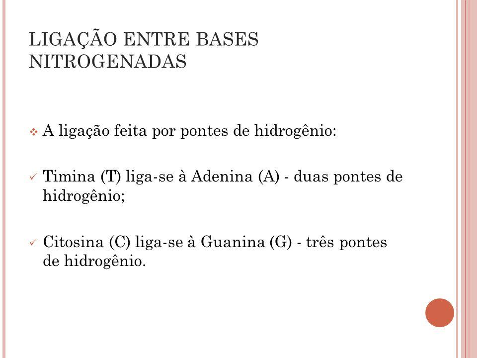 A ligação feita por pontes de hidrogênio: Timina (T) liga-se à Adenina (A) - duas pontes de hidrogênio; Citosina (C) liga-se à Guanina (G) - três pont
