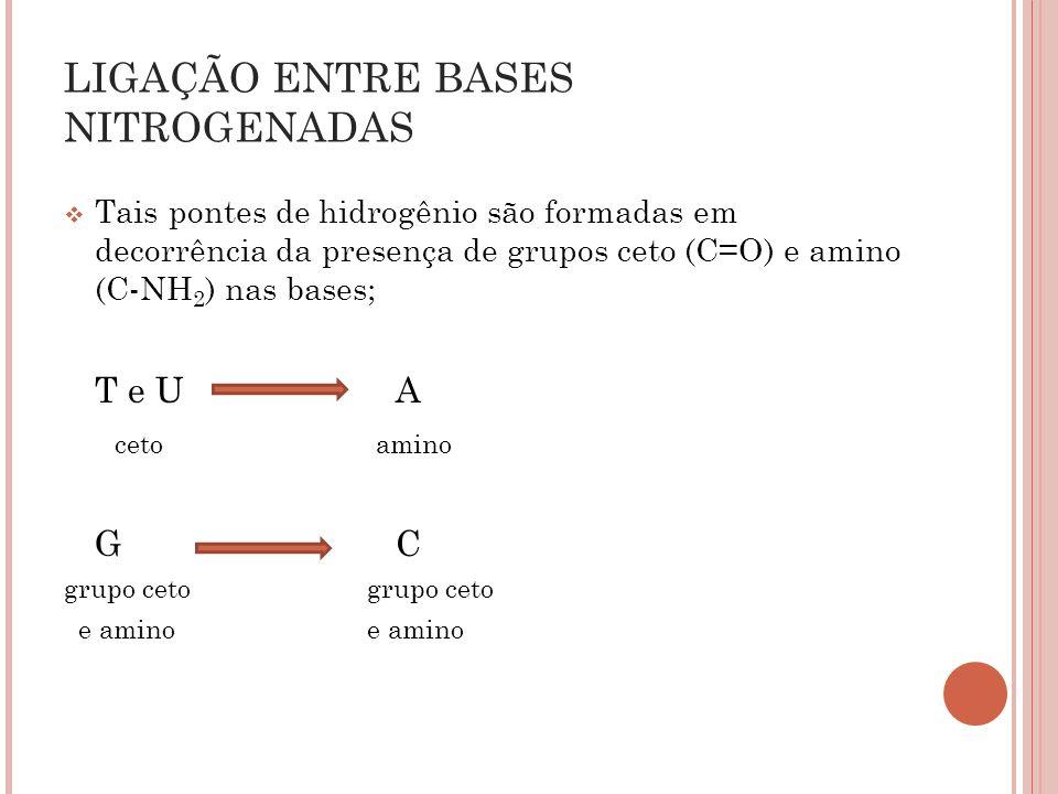 Tais pontes de hidrogênio são formadas em decorrência da presença de grupos ceto (C=O) e amino (C-NH 2 ) nas bases; T e U A ceto amino G C grupo ceto