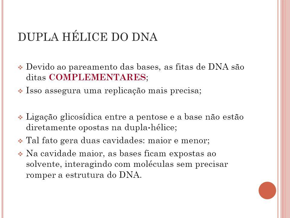 Devido ao pareamento das bases, as fitas de DNA são ditas COMPLEMENTARES ; Isso assegura uma replicação mais precisa; Ligação glicosídica entre a pent