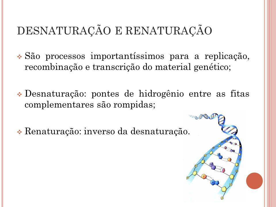 São processos importantíssimos para a replicação, recombinação e transcrição do material genético; Desnaturação: pontes de hidrogênio entre as fitas c