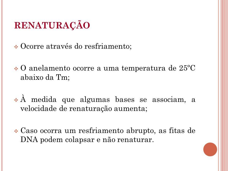 Ocorre através do resfriamento; O anelamento ocorre a uma temperatura de 25ºC abaixo da Tm; À medida que algumas bases se associam, a velocidade de re