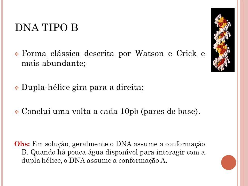 Forma clássica descrita por Watson e Crick e mais abundante; Dupla-hélice gira para a direita; Conclui uma volta a cada 10pb (pares de base). Obs: Em