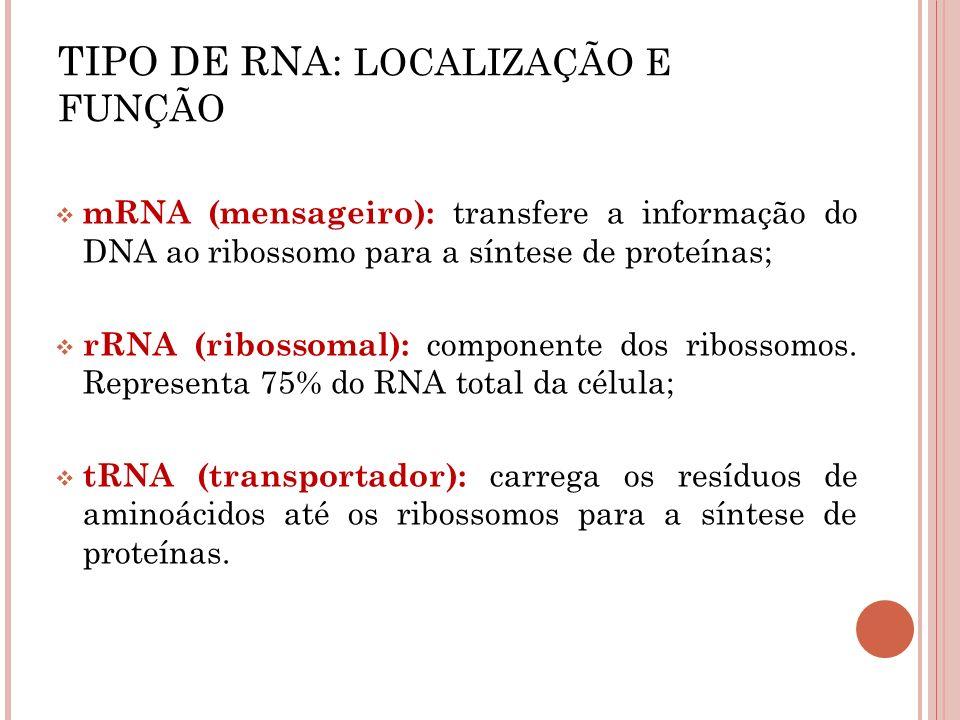 mRNA (mensageiro): transfere a informação do DNA ao ribossomo para a síntese de proteínas; rRNA (ribossomal): componente dos ribossomos. Representa 75
