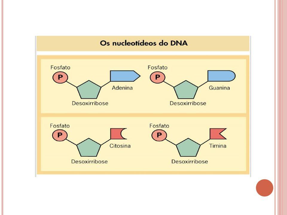 DNA: possui uma desoxirribose.Ácido desoxirribonucléico RNA: possui uma ribose.