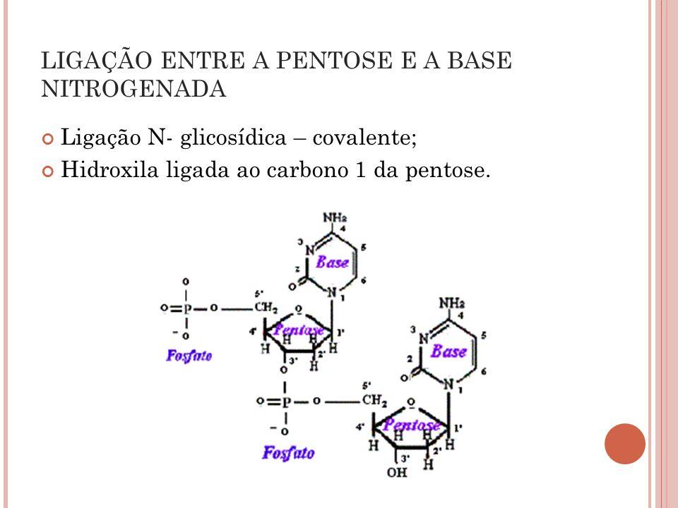 Ligação N- glicosídica – covalente; Hidroxila ligada ao carbono 1 da pentose. LIGAÇÃO ENTRE A PENTOSE E A BASE NITROGENADA