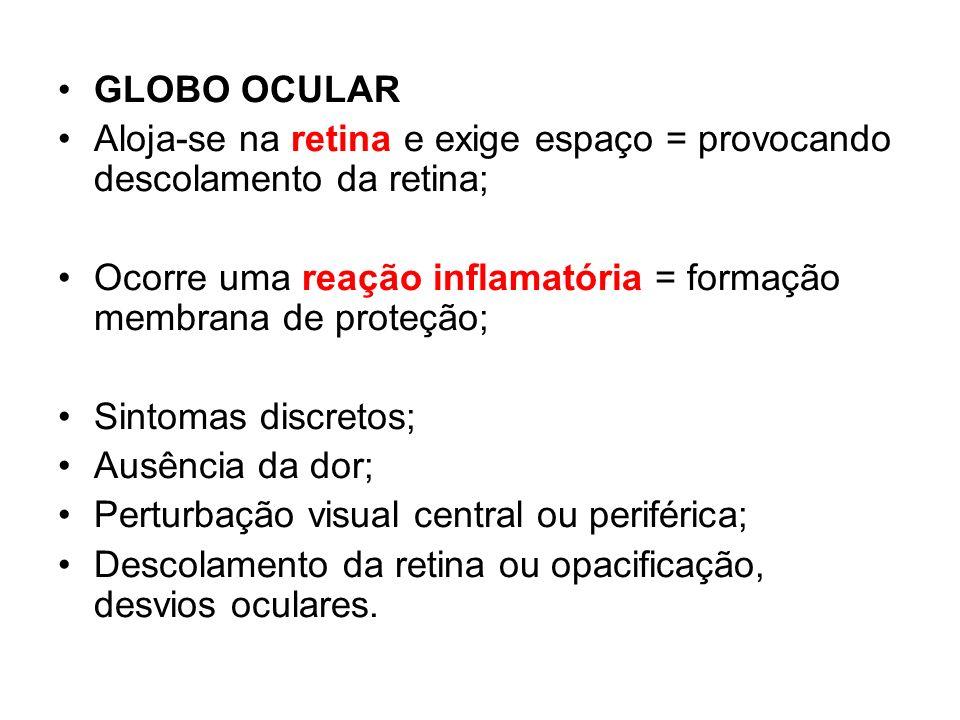 GLOBO OCULAR Aloja-se na retina e exige espaço = provocando descolamento da retina; Ocorre uma reação inflamatória = formação membrana de proteção; Si