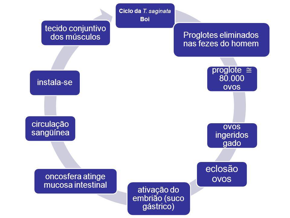 CONTROLE Legislação (notificação dos casos humanos, proibição abates clandestinos); Vigilância epidemiológica; Medidas de controle da carne; Proteção ambiental; Educação sanitária.