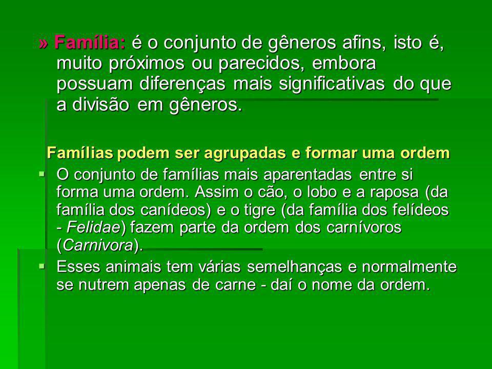 » Família: é o conjunto de gêneros afins, isto é, muito próximos ou parecidos, embora possuam diferenças mais significativas do que a divisão em gêner