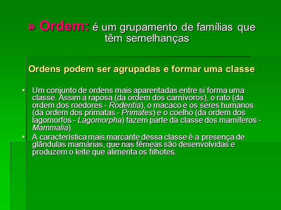 » Ordem: é um grupamento de famílias que têm semelhanças Ordens podem ser agrupadas e formar uma classe Um conjunto de ordens mais aparentadas entre s