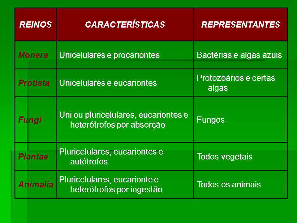 REINOSCARACTERÍSTICASREPRESENTANTES MoneraUnicelulares e procariontesBactérias e algas azuis ProtistaUnicelulares e eucariontes Protozoários e certas