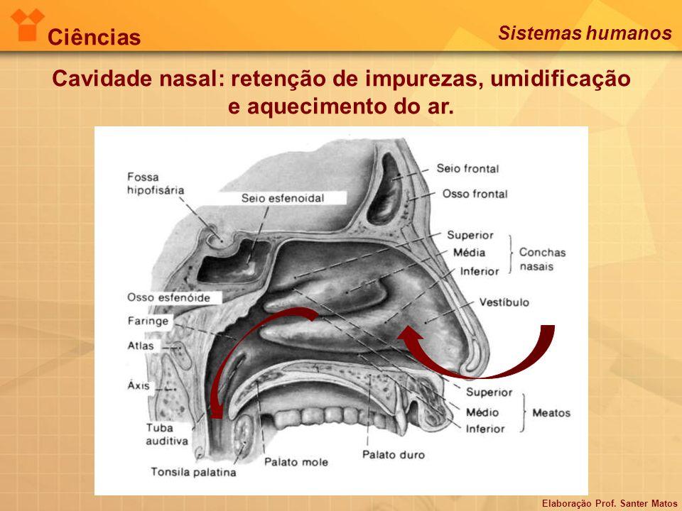 Cavidade nasal: retenção de impurezas, umidificação e aquecimento do ar. Elaboração Prof. Santer Matos Ciências Sistemas humanos