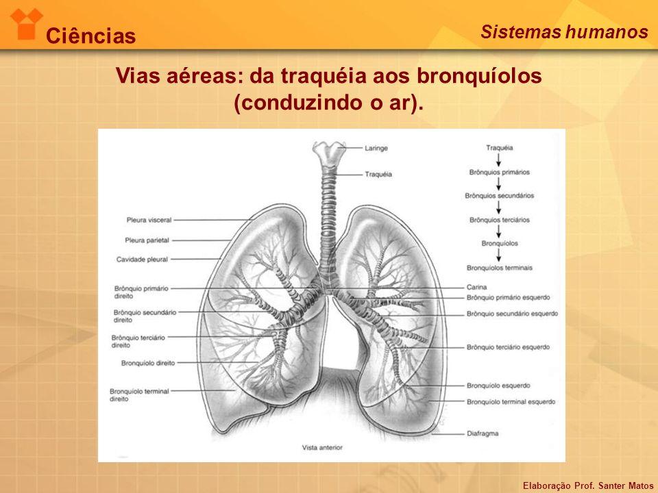 Vias aéreas: da traquéia aos bronquíolos (conduzindo o ar). Elaboração Prof. Santer Matos Ciências Sistemas humanos
