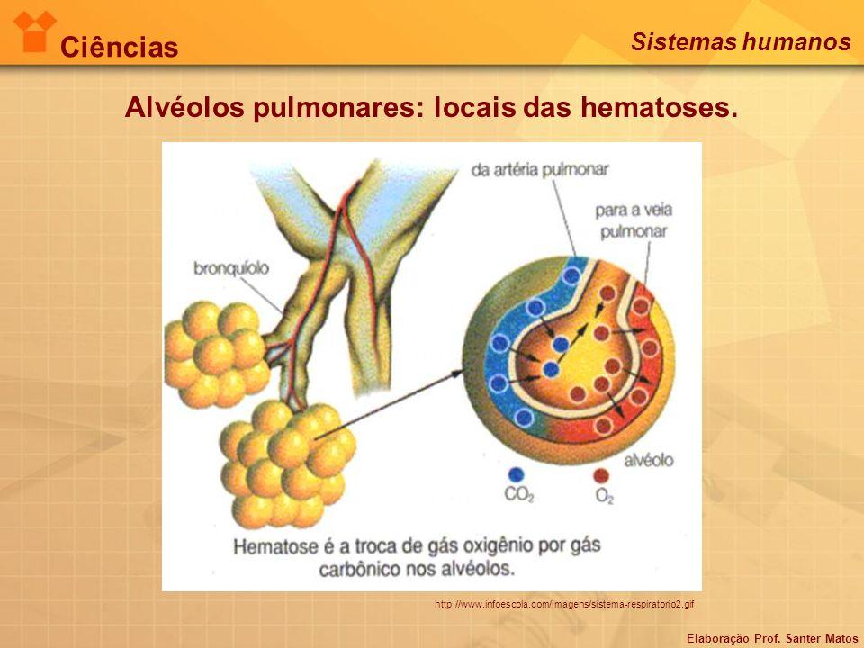 http://www.infoescola.com/imagens/sistema-respiratorio2.gif Alvéolos pulmonares: locais das hematoses. Elaboração Prof. Santer Matos Ciências Sistemas