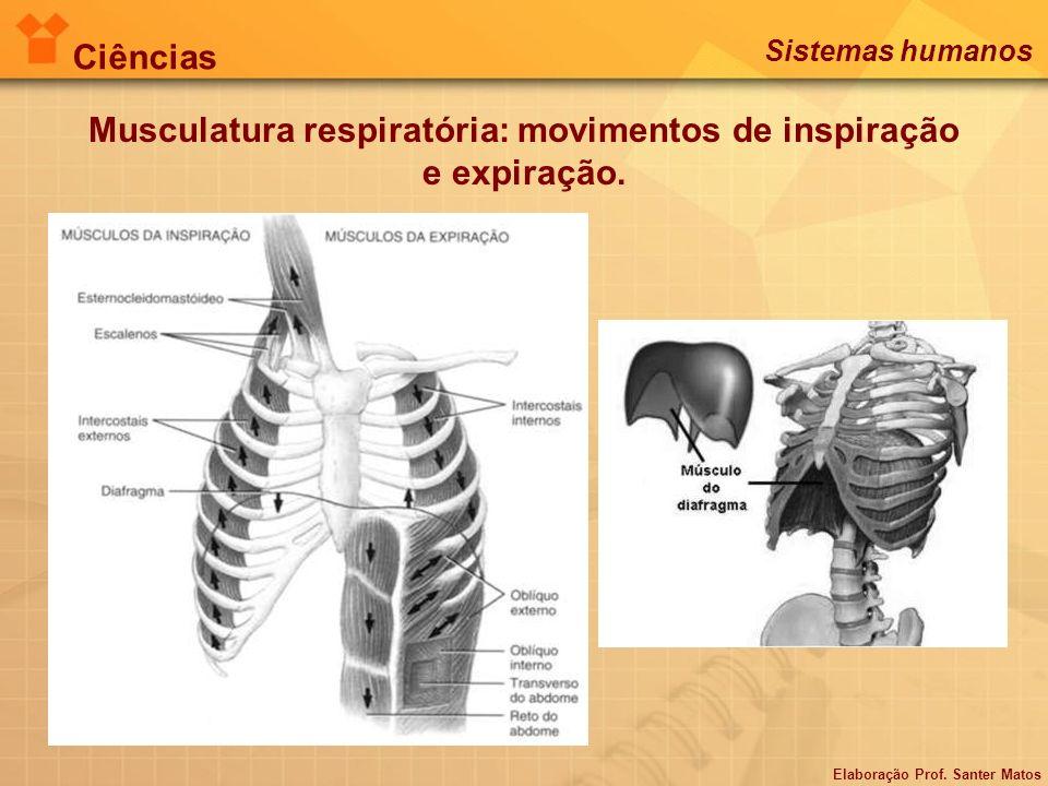 Musculatura respiratória: movimentos de inspiração e expiração. Elaboração Prof. Santer Matos Ciências Sistemas humanos