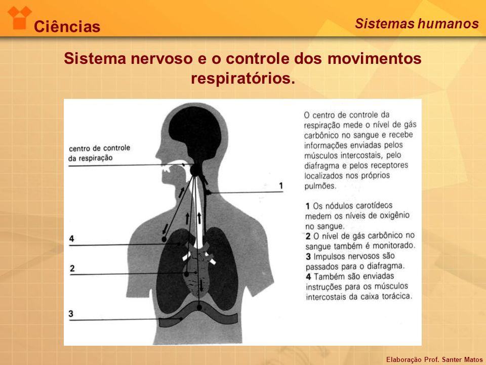 Sistema nervoso e o controle dos movimentos respiratórios. Elaboração Prof. Santer Matos Ciências Sistemas humanos