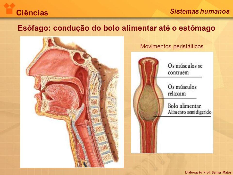 Esôfago: condução do bolo alimentar até o estômago Movimentos peristálticos Ciências Sistemas humanos Elaboração Prof. Santer Matos