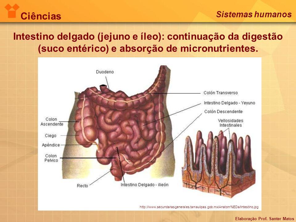 Intestino delgado (jejuno e íleo): continuação da digestão (suco entérico) e absorção de micronutrientes. http://www.secundariasgenerales.tamaulipas.g