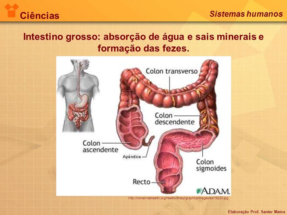 Intestino grosso: absorção de água e sais minerais e formação das fezes. http://lomalindahealth.org/health-library/graphics/images/es/19220.jpg Ciênci