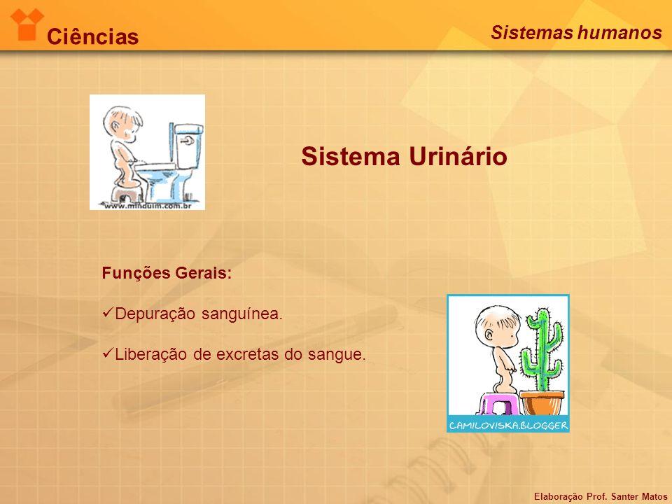 Sistema Urinário Funções Gerais: Depuração sanguínea. Liberação de excretas do sangue. Elaboração Prof. Santer Matos Ciências Sistemas humanos